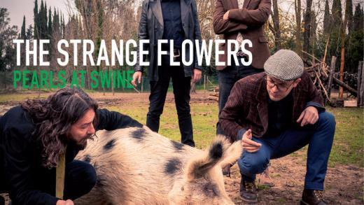 thestrangeflowers