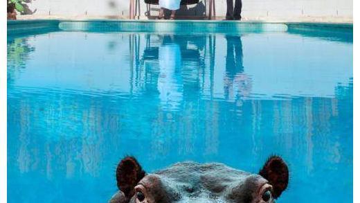 Sparks - Hippopotamus | recensione